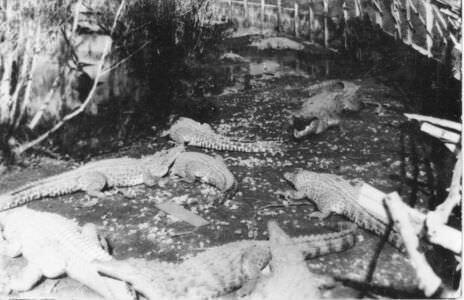 074. Крокодилий питомник