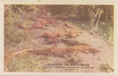 198. Индейская деревня, гармошка открыток, 6 кадр
