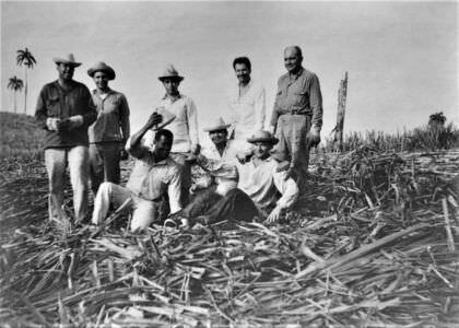 057. Советские специалисты помогают кубинцам: уборка сахарного тростника, фото 4
