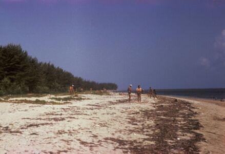 393. «Барка». Пляж
