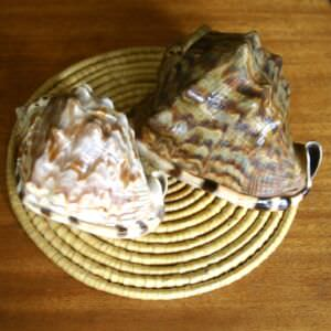 039. Ракушка Cassis cornuta, фото 4