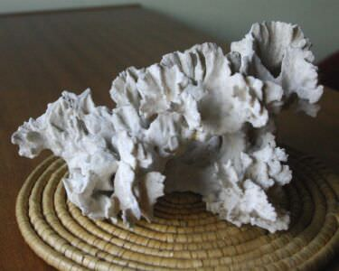 069. Коралл 3, тип Millepora complanata, фото 4