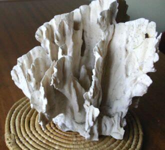 083. Коралл 6, тип Millepora complanata, фото 4