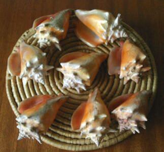 142. Ракушка Strombus pugilis (Стромбус боец), фото 3