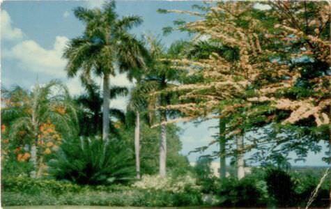 50. Карточка почтовая. Частный сад  в жилой части Гаваны. Республика Куба, г. Гавана. 1960-е гг.