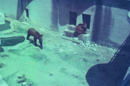1968-1970. Зоопарк, медведи