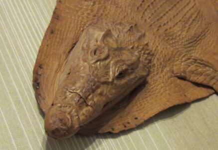 Голова крокодила крупным планом