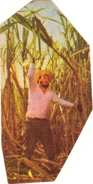148. Фидель Кастро на сафре. Титул.