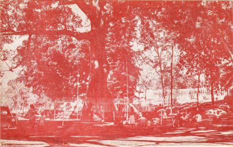 017. Дерево мира. Сантьяго-де-Куба. Титул.