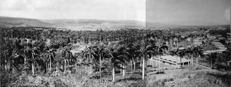 031. Панорамный снимок Моа: слева-направо, 4 из 7