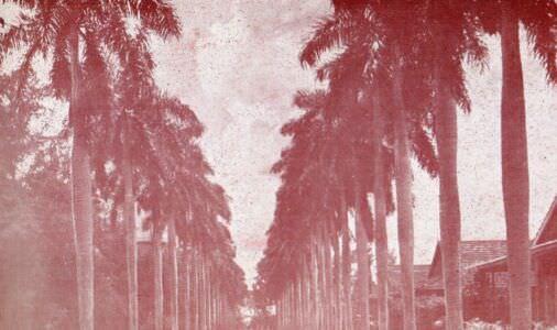 183. Пальмовая аллея