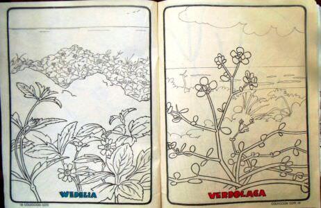 Стр. 18-19. «wedelia» (веделия) и «verdolaga» (портулак огородный)