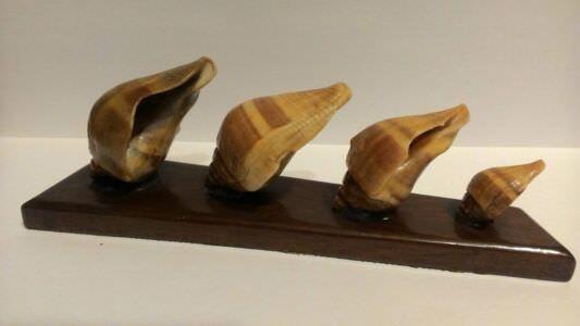 Ракушки на подставке из баобаба