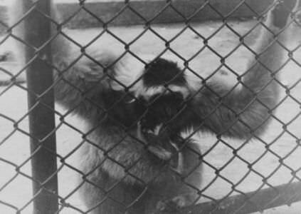 54. 1964. В Гаванском зоопарке, фото 5