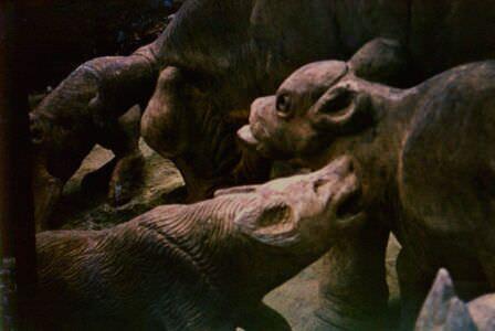 206. «Каменный зоопарк» в Ятерасе - Zoologico de Piedra. 1980-1984, фото 10