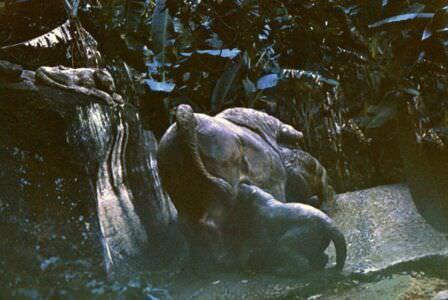 «Каменный зоопарк» в Ятерасе - Zoologico de Piedra. 1980-1984, фото 12