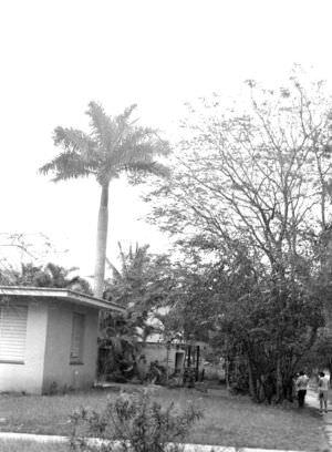 016. Дом с пальмой на 5 авениде, 1976