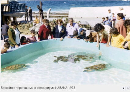 031. Бассейн с черепахами в Океанариуме (Аквариуме), 1978