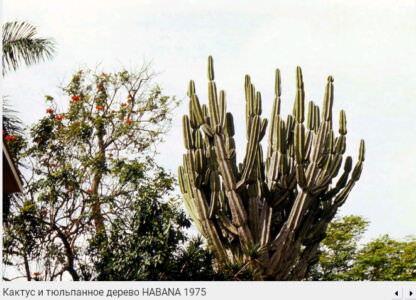 074. Кактус и тюльпанное дерево, 1975