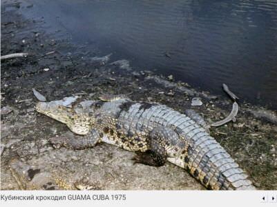 117. Крокодилий питомник в Гуама, 1976, фото 2