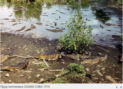 118. Крокодилий питомник в Гуама, 1976, фото 3
