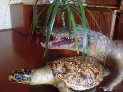 Крокодил и морская черепаха