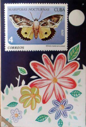 Календарик на 1980 год - Ночные бабочки