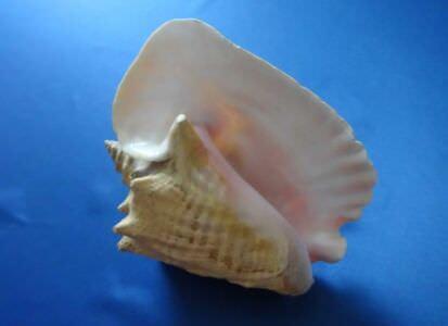 377. Морская раковина, фото 2