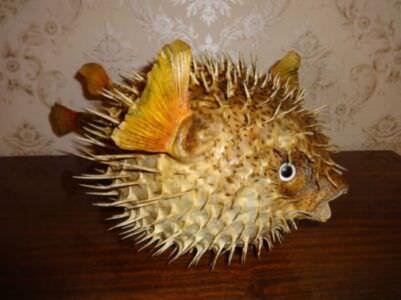 241. Рыба-шар. Ракурс 3