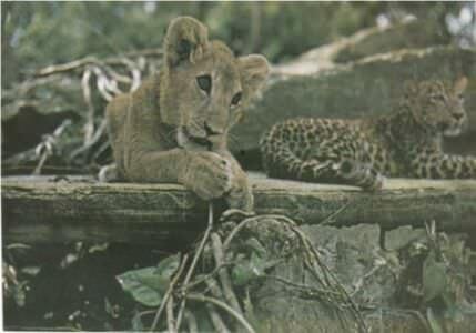 265. Национальный зоопарк