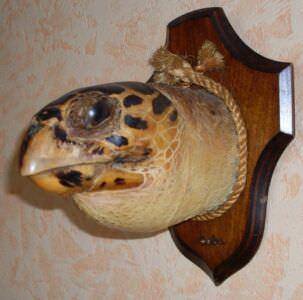 Голова морской черепахи, фото 1