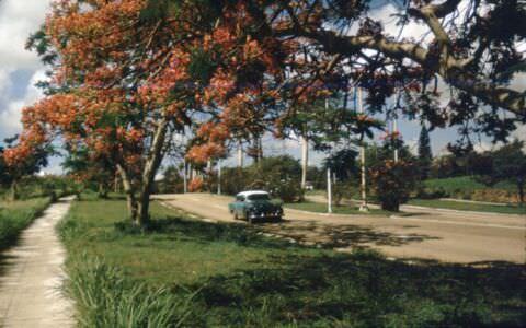 1990-05-ХХ. Цветущие фрамбояны на спуске к Санта-Марии. Спуск к Санта-Марии. Машина 1950-х гг.