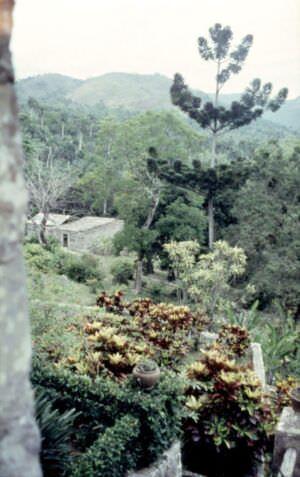 1989-04-16. Сороа. Питомник орхидей, фото 10