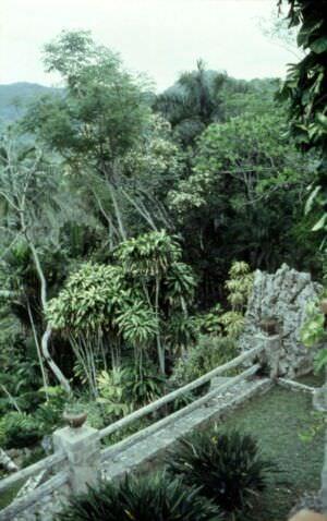 1989-04-16. Сороа. Питомник орхидей, фото 12