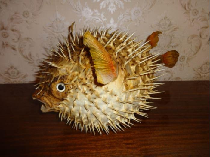 Рыба-шар. Ракурс 1