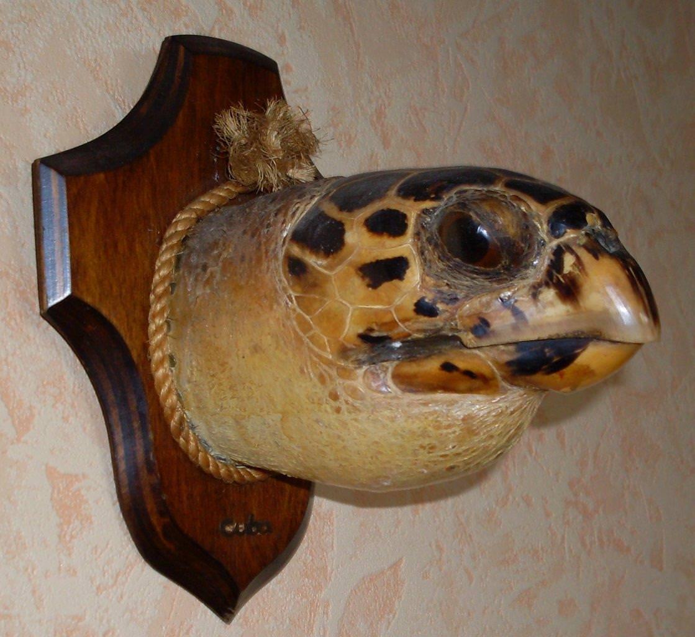 Голова морской черепахи, фото 2