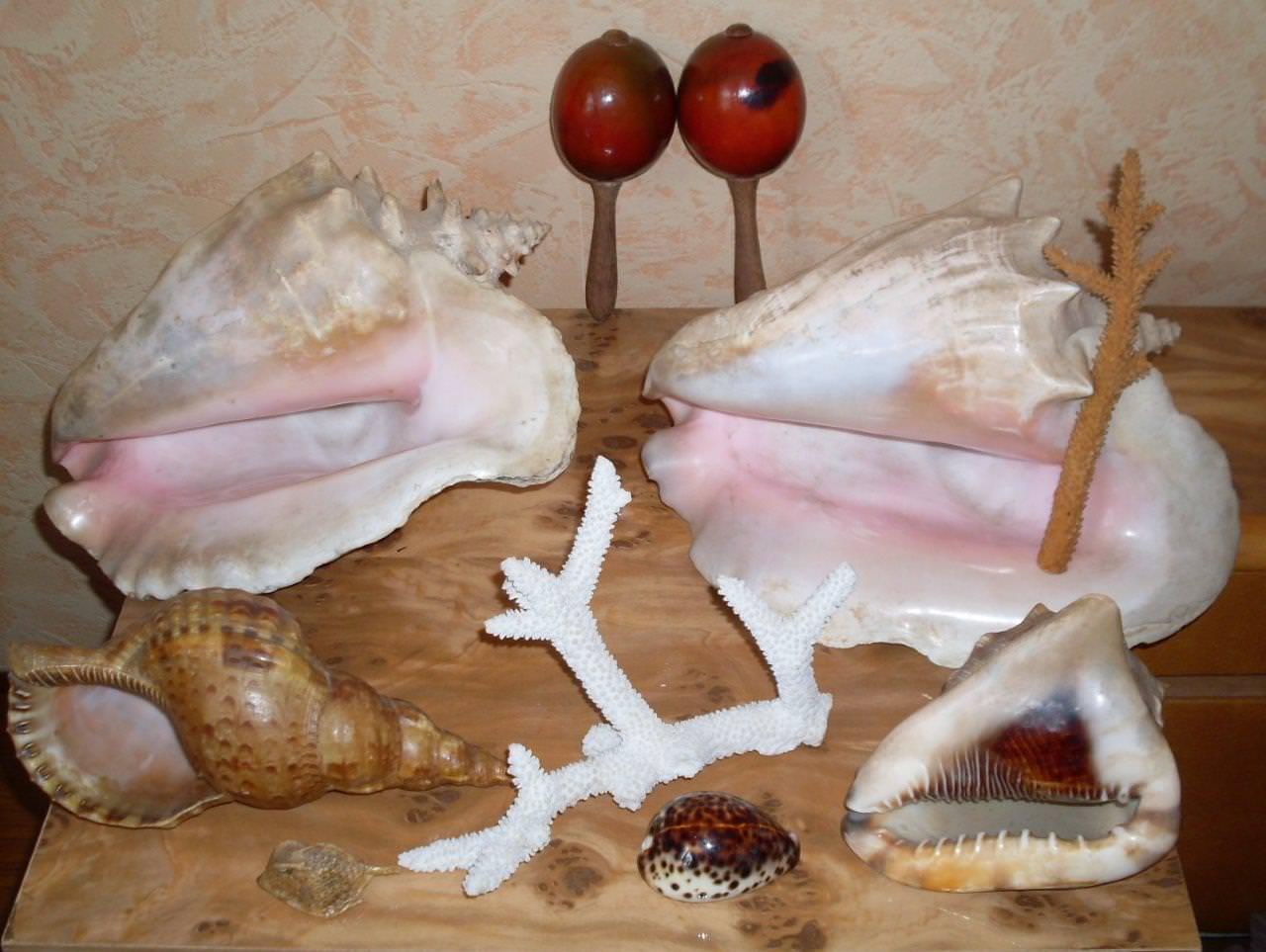 Коллекция ракушек и кораллов